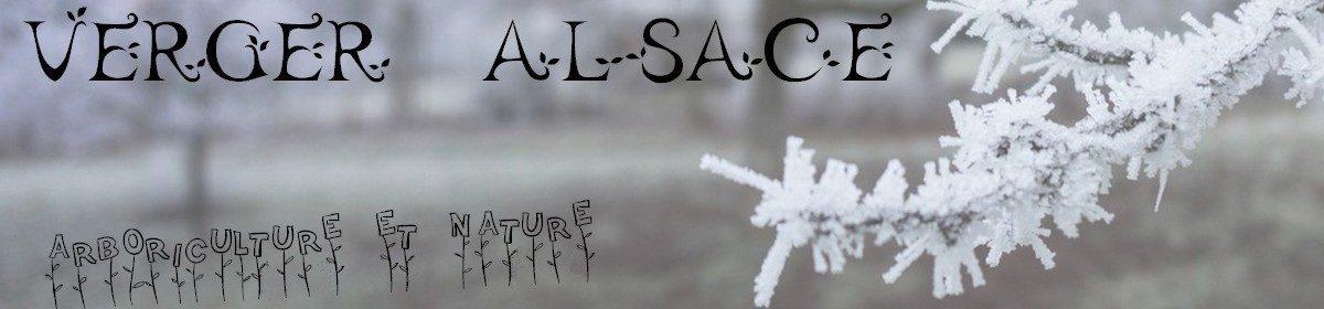 Verger Alsace